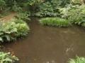 予備_馬堀自然教育園下の池