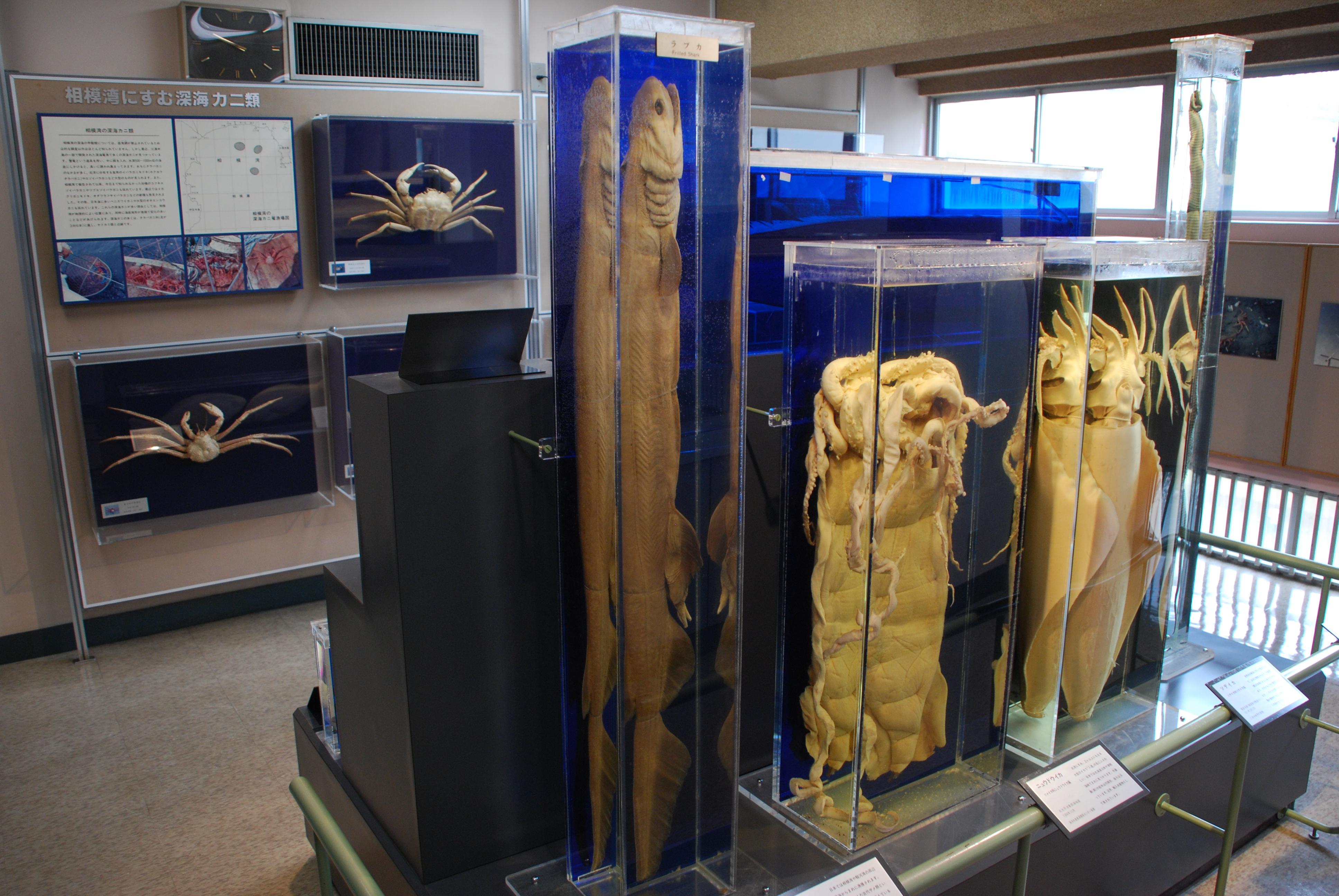 10珍しい標本コーナー