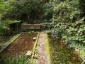 予備_馬堀自然教育園上の池